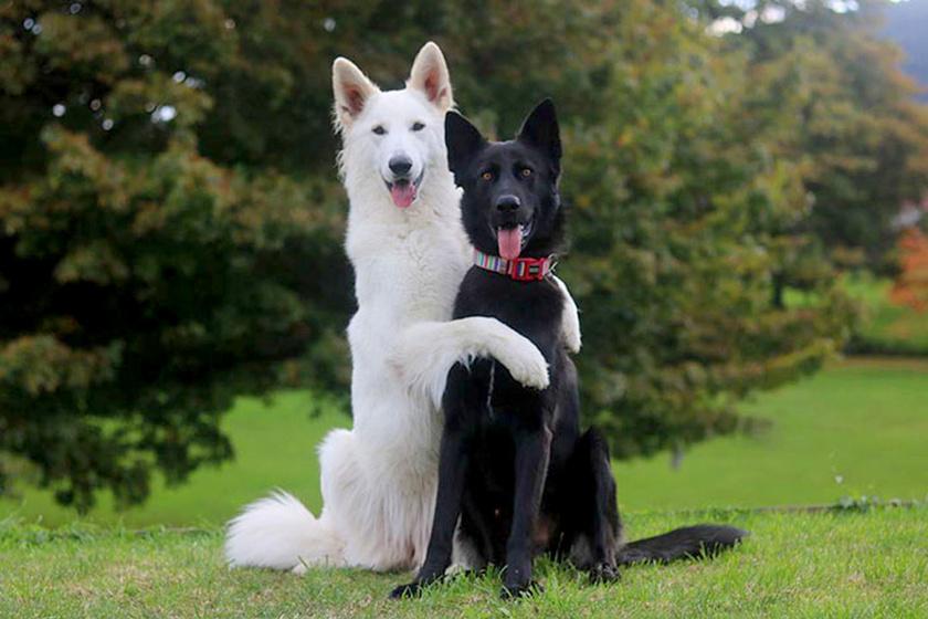 kutyak-pozolnak