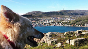 Megkaptam, hogy Norvégiában az adófizetők pénzéből élünk