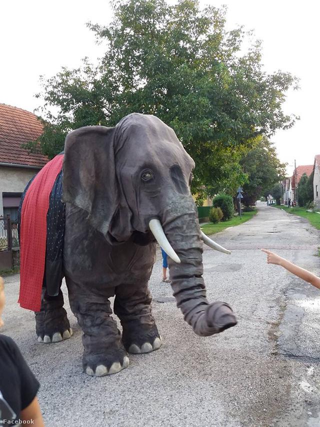 Vajon hogy fogják hívni az elefántot?