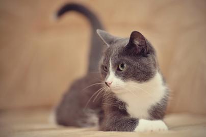 macska-cuki