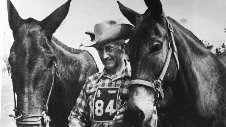 Minden idők leghosszabb lóversenyét egy öszvér nyerte