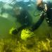 Rövid hínárokat telepítenek a Duna holtágában fürdőzők kedvéért