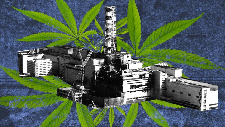 Csernobilban marihuánával tisztították meg a szennyeződött földet