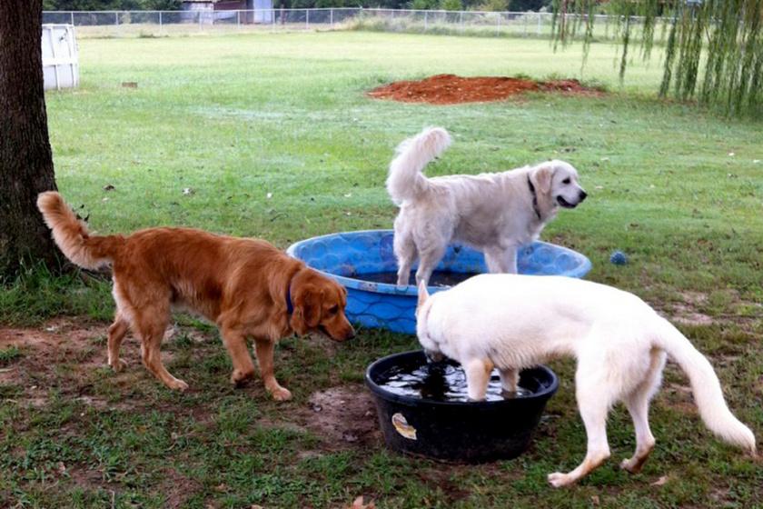 kutyak-viz