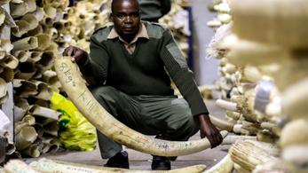 Tíz elefántot mérgeztek meg Zimbabwében