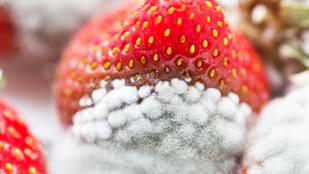 A penészes gyümölcs nem a világvége
