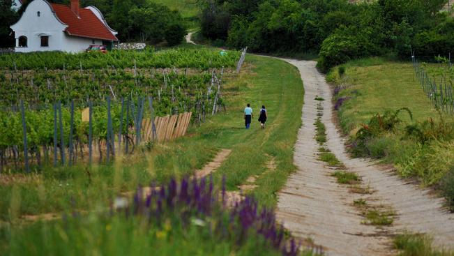 A Balaton-felvidék is toplistás az utazási szakértők és bloggerek szerint