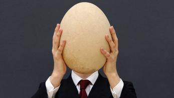 Miért gömbölyű az egyik tojás és miért hegyes a másik?