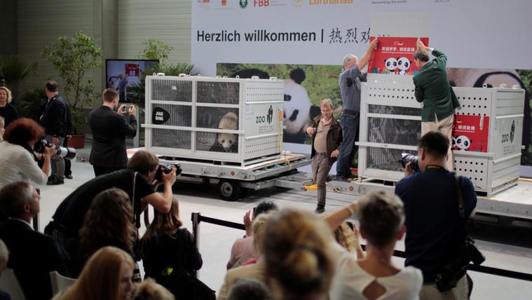 Két pandát kap a Berlini Állatkert a kínai elnök érkezése előtt