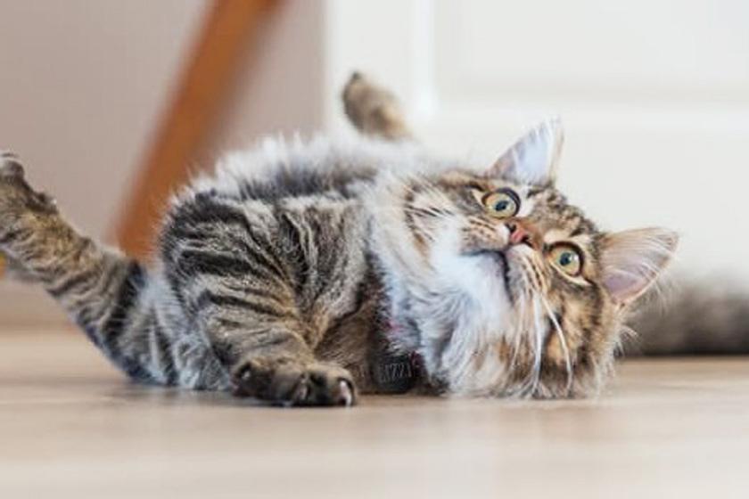 Ezért tarts macskát! Az egészségre is pozitív hatással vannak
