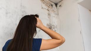 Allergiás tüneteket okozhat a penész a lakásban