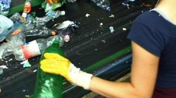 Halott disznó a szelektív hulladékban