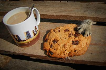 macska-keksz