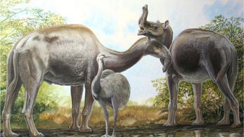 Darwin óta találgatták, milyen állat, most megvan