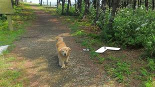 A nap trollja: a kutya, ami photobombolta a street view fotós összes képét