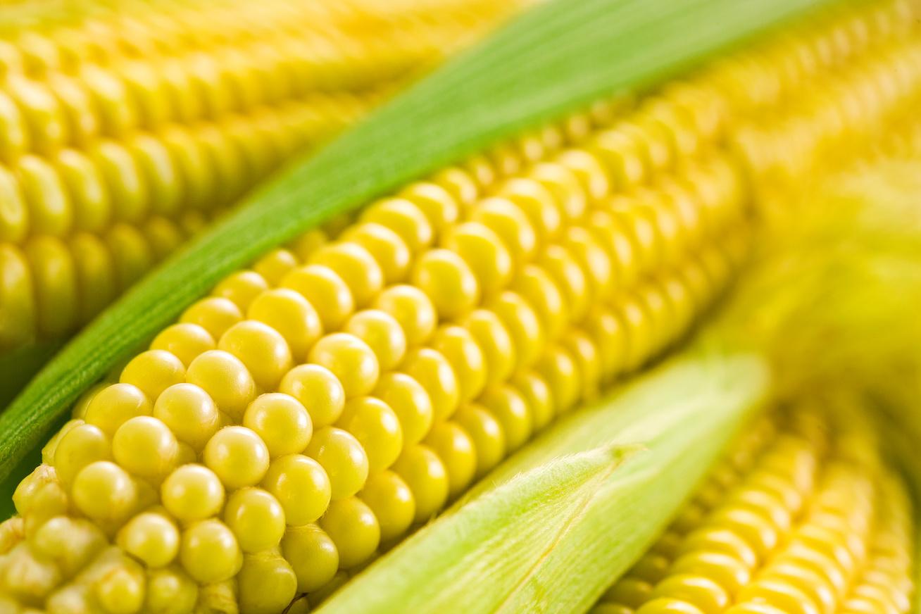 kukorica csovek
