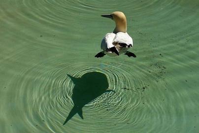 madár-halárny-fb