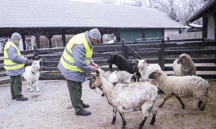 A Budapesti Fegyház és Börtön fogvatartottjai kecskéket és juhokat etetnek a Rex Állatsziget budapesti telephelyén.