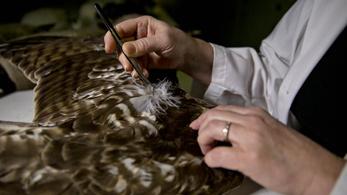 Börtönbe kerül a visszaeső madártoll-szarka, mert áltudósnak kiadva magát múzeumokat fosztogatott