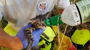 Wilson macska jön eggyel a speciális mentőknek
