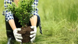 Hány kalóriát égethetünk el a kertészkedéssel?
