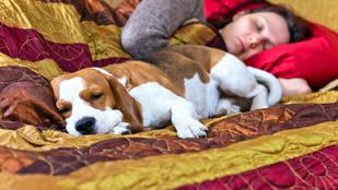 Együtt alszotok? A gyerekkel? És a kutyával is???