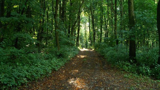 Bazaltbarlangolás és geobotanikai túrák is lesznek júliusban a Balaton-felvidéken