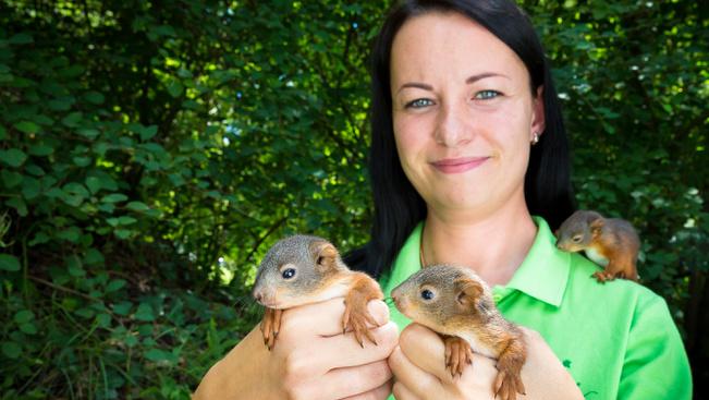 A vihar után három mókuskölyköt fogadott be a Veszprémi Állatkert