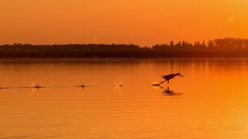 A Balaton után most a Tisza-tó körül futnak több ezren