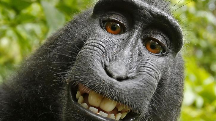 1499971813975-monkey (1)