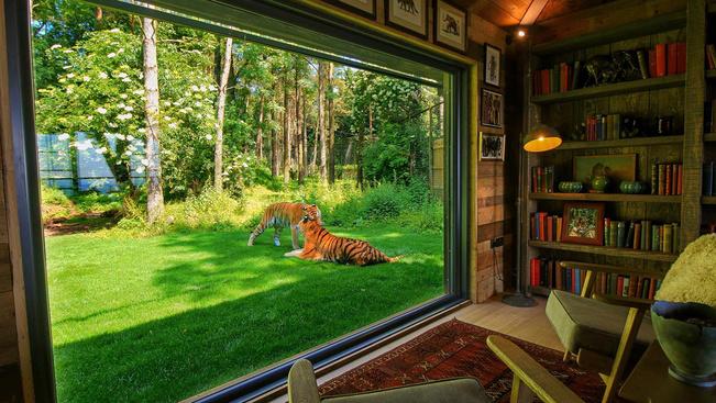 Már unja a klasszikus szafarit? Aludjon tigrissel bérelt házának kertjében!