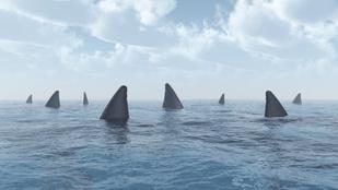 Vajon megesznek a cápák, ha menstruálsz?