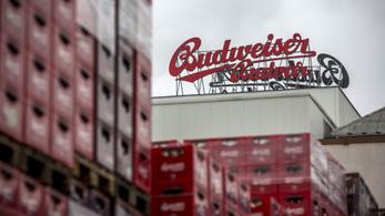 Nem tud már elég sört gyártani a Budweiser, annyira isszák