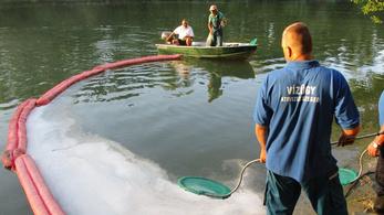 40 kiló olajszennyet szedtek le a Tiszáról Algyőnél