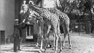 Sissi  ajándéka egy zsiráf volt
