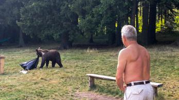 Összefutottunk egy medvével Erdélyben