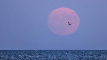 Jóval több víz van a Holdon, mint azt eddig hitték