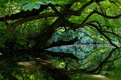vacratoti arboretum cover