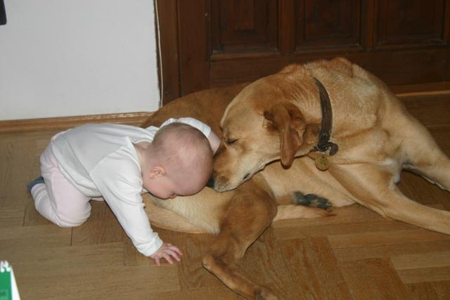 Díványos gyerek kutyával (azóta már 10 éves, nem ette meg az állat)