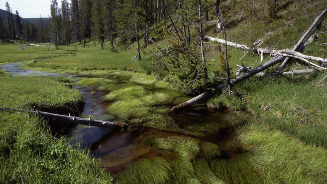 Másfél hónapja folyamatosan reng a föld a Yellowstone Nemzeti Parkban