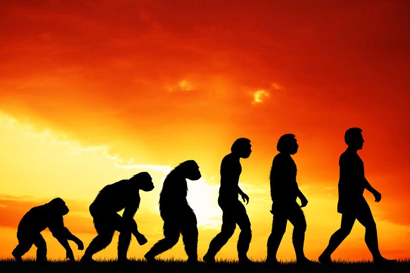 Kinek a nevéhez fűződik az evolúció? 10-ből 10-en rosszul válaszolnak a kérdésre
