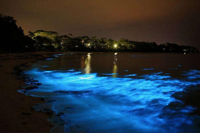 A víz ragyogása a víz szabad szemmel láthatatlan élővilágának köszönhető.A képen a jamaicai Luminous Lagoon látható.