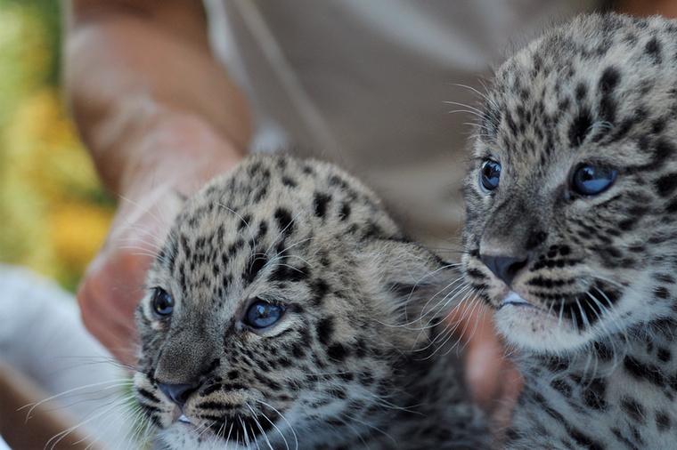 A továbbiakban kommentár nélkül mutatunk képeket róluk: így viselkedtek életük első állatorvosi vizsgálatán.