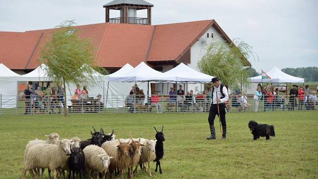 Pásztorkutyák versenye és családbarát programok a Duna-Dráva Nemzeti Parkban