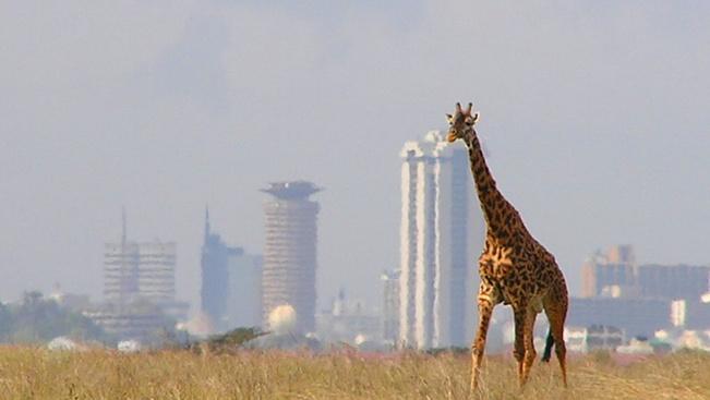 Oroszlánok marcangoltak szét egy 18 éves fiút egy kenyai nemzeti parkban