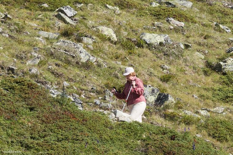 Annyi híres nő nyaralásába tekinthettünk be mostanában, hogy nem tudtunk ellenállni ennek a fantasztikus kontrasztnak: Angela Merkel is sokat szerepel a sajtóban, de a hírek más alanyaival ellentétben nem jachton sütteti magát, hanem férjestül mászik hegyre. És láthatóan beválna kecskének is, olykor kimondottan meredek terepen kaptat.