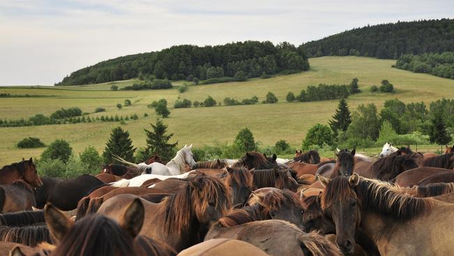 Hucul lovak és kincskereső tanösvény várják Jósvafőn