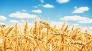 A klímaváltozás miatt vas- és fehérjehiány is lesz