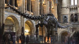 Kisfiú- Londoni Természettudományi Múzeum 1:0