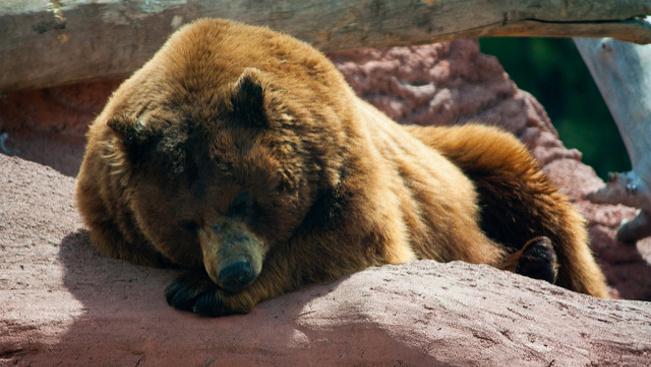 Elkötött egy kocsit egy medve az Államokban